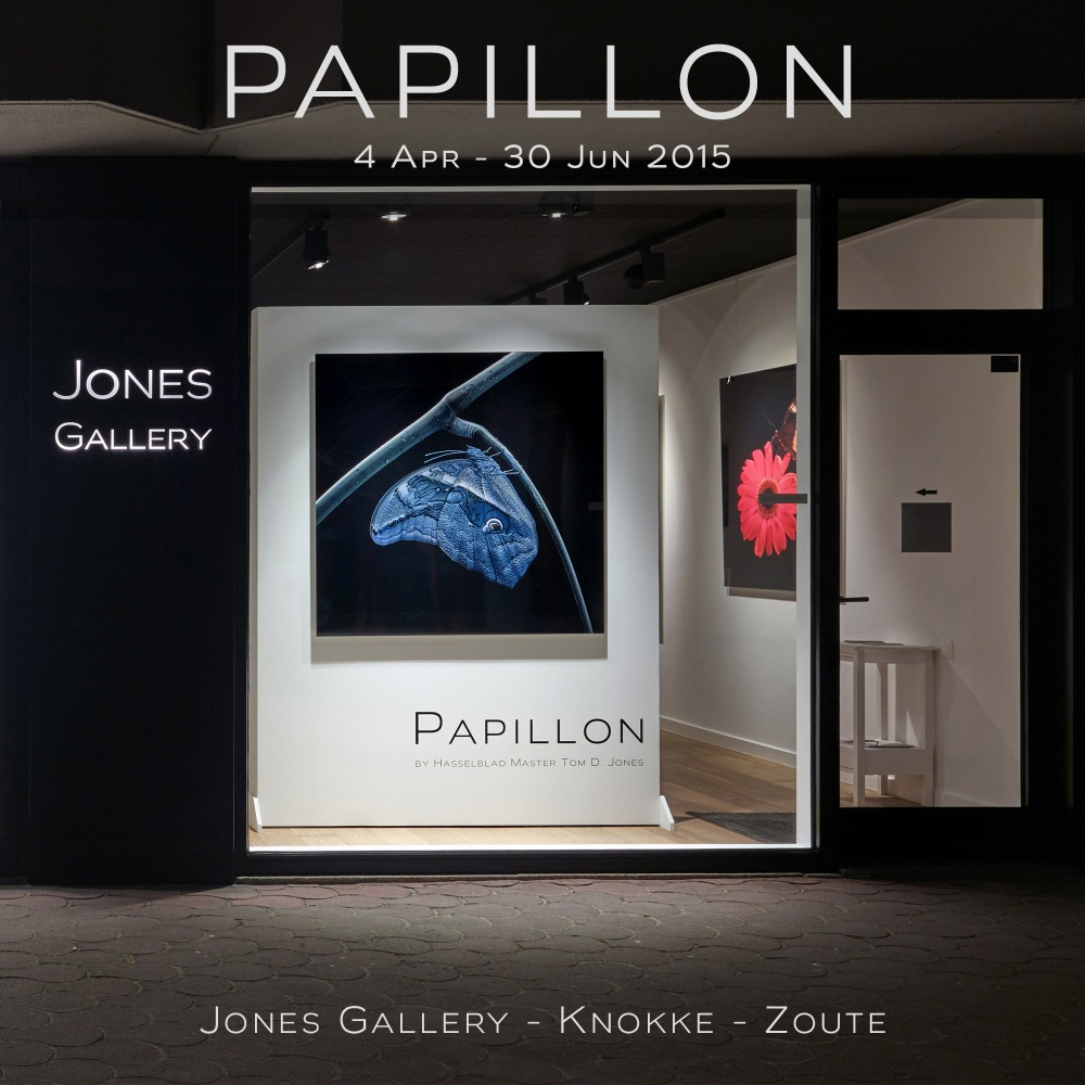 Jones Gallery - Papillon